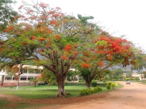 Kwadaso Agricultural College, Kumasi